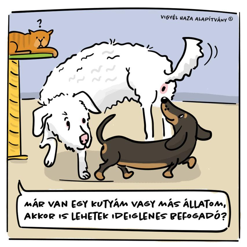 Kutya-történetek